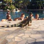 Ah, memories of @strombo driving Lizard Limo in #Kelowna MT @tsnjamesduthie My kids making new friends in Costa Rica http://t.co/Vm53J69uIM