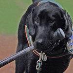 RT: To wish Miss Babe Ruth a happy retirement! #GoodbyeBabe @GSOHoppers http://t.co/tAgOxWwfbn