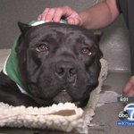 $1,000 reward offered to person w/info leading to suspect who stabbed Santa Paula dog 5 times http://t.co/1hcJSZxSEl http://t.co/ag0rFmiGZf