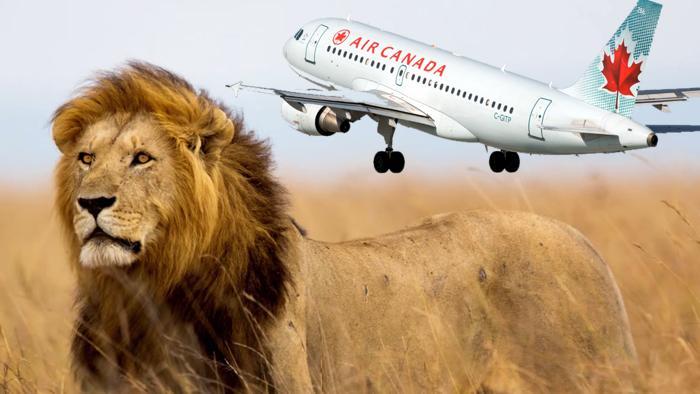 #AirCanada prohíbe transportar trofeos de caza → http://t.co/Oo8lDvrDwb http://t.co/97yn0fpPK7