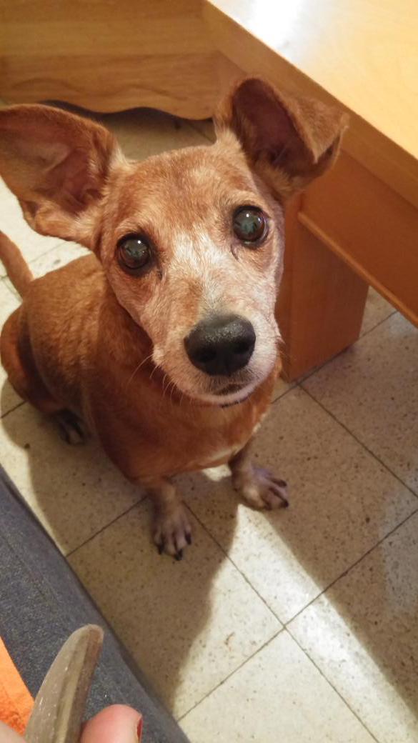 עדיין מחפשת פנסיון לאבנר הכלבלב בין 8-15/9, הוא חמוד ועייף אז כדאי לכם. רטווטו אם אתם לא פנסיון http://t.co/gjFK1OyDvo