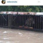 """""""@USSKru: Власти Уссурийска бездействуют.медвежата тонут в парке зеленый остров . http://t.co/rHQPLHBG7d"""" Эй,в Уссурийске! Вы там охренели?!"""