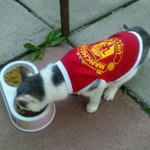 Pippa 21yr old belfast man utd cat in utd cat pet top enjoys pre match meal before swansea game.pippa says 3-1 united http://t.co/qvvhT6GQxg