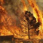 Вместо того,что бы лететь в Сибирь руководить тушением пожаров они жарят барбекю.Скажите им что вся Бурятия -Барбекю! http://t.co/m7GJaRezO9