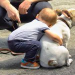 eu qnd vejo cachorros http://t.co/gu85r63ss2