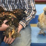 Youth poultry competition photos are my faves in Colo. State Fair gallery by @jerileebennett. http://t.co/PisSI3NExk http://t.co/Qkg1s7CUxU