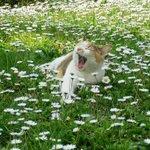 Котик среди ромашек в твоей ленте. В память о лете. http://t.co/AcDAx3Q2eZ