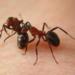 الحشرات لا تشعر بالألم لعدم وجود خلايات عصبية تمرر الآلام http://t.co/8gwvldUFrJ
