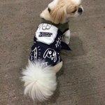 RT FOR RJ THE TOUR DOG #ShesKindaHotVMΑ http://t.co/LtSasZng5S