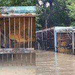 В Уссурийске спасатели на лодках ищут животных в затопленном зоопарке http://t.co/gSRS8D4fp6 http://t.co/G1rsm4hZeb