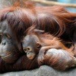 Costa Rica cerrará sus zoológicos y liberará a los animales c ... #CostaRica #Zoológico http://t.co/LfoB5ylsh9 http://t.co/qjPC1Hrj24