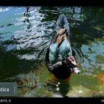 Un típico habitante de la hermosa laguna del parque recreacional infantil Jipiro. #Loja http://t.co/Z7OTGs5mlK
