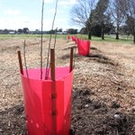 The first trees have been planted at the Lyneham food forest just in time for spring http://t.co/XoeOs1ZYd5 http://t.co/jgybXc7VKW