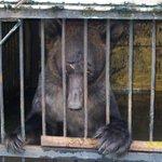 Руководство уссурийского коммерческого зоопарка пальцем не пошевелило, чтобы спасти животных. http://t.co/Y0068P4Wy6