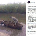 Российский зоопарк повторяет судьбу тбилисского. Страшные ФОТО http://t.co/LZN9zByrw5 http://t.co/iHpH8Rr6HK