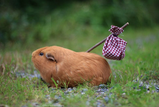 Donald Trump's hair finally runs off to seek a better life. #Trump2016 http://t.co/yswo5Mv5QC
