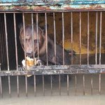 В Уссурийске погибают животные в затопленном паводком зоопарке http://t.co/voQsSJZR4f http://t.co/h909HYGa1R