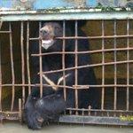 !!! В Уссурийском зоопарке во время наводнения утонули животные, так как руководству было пох http://t.co/nvTRkaDO2V http://t.co/Il1JOXae6I