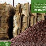#Ecuador es el quinto productor mundial de cacao. Varios factores complican su producción » http://t.co/4TltOq2tUr http://t.co/r1d853cQ9s
