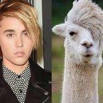 Tony Hawk has taken to Instagram to mock Justin Biebers terrible haircut at the VMAs... http://t.co/5fUKjioIKi http://t.co/Mnx86Ykyuq