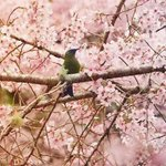 Its spring in #wellington #newzealand from @TabithaWoods001 #NZ_birds http://t.co/EZC1nJecXC