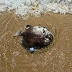 السمك الميت في بحر #قطر بسبب ارتفاع الحرارة في الصيف http://t.co/nVbcTKojik عبر @dohanews #بحوث_قطر #تغير_المناخ http://t.co/H1rYSH71lo