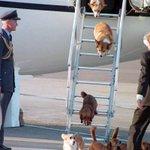 번역) 여왕님 댁 멍뭉이의 비행기 트랩 오르락 내리락 하는 모습이 귀여워서 심쿵♡ http://t.co/qXME5vY2G5