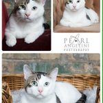 Chance 2yr old male avail from @ManitobaMutts #Winnipeg #AdoptDontShop #SpayAndNeuter #WpgPet http://t.co/cwOQivhK7y