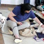 Alumnos y académicos de la udg_oficial participan en esterilización de mascotas. >> http://t.co/mPNG9Sk6P9