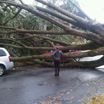 10 shocking photos from the disastrous windstorm in metro #Vancouver http://t.co/AmanPmYeGL http://t.co/47esz4kWQb