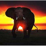 Chinese photographer's mission to raise awareness on poaching http://t.co/u4ikCuOCfG #SaveTheElephants http://t.co/cs6VkbqJaZ