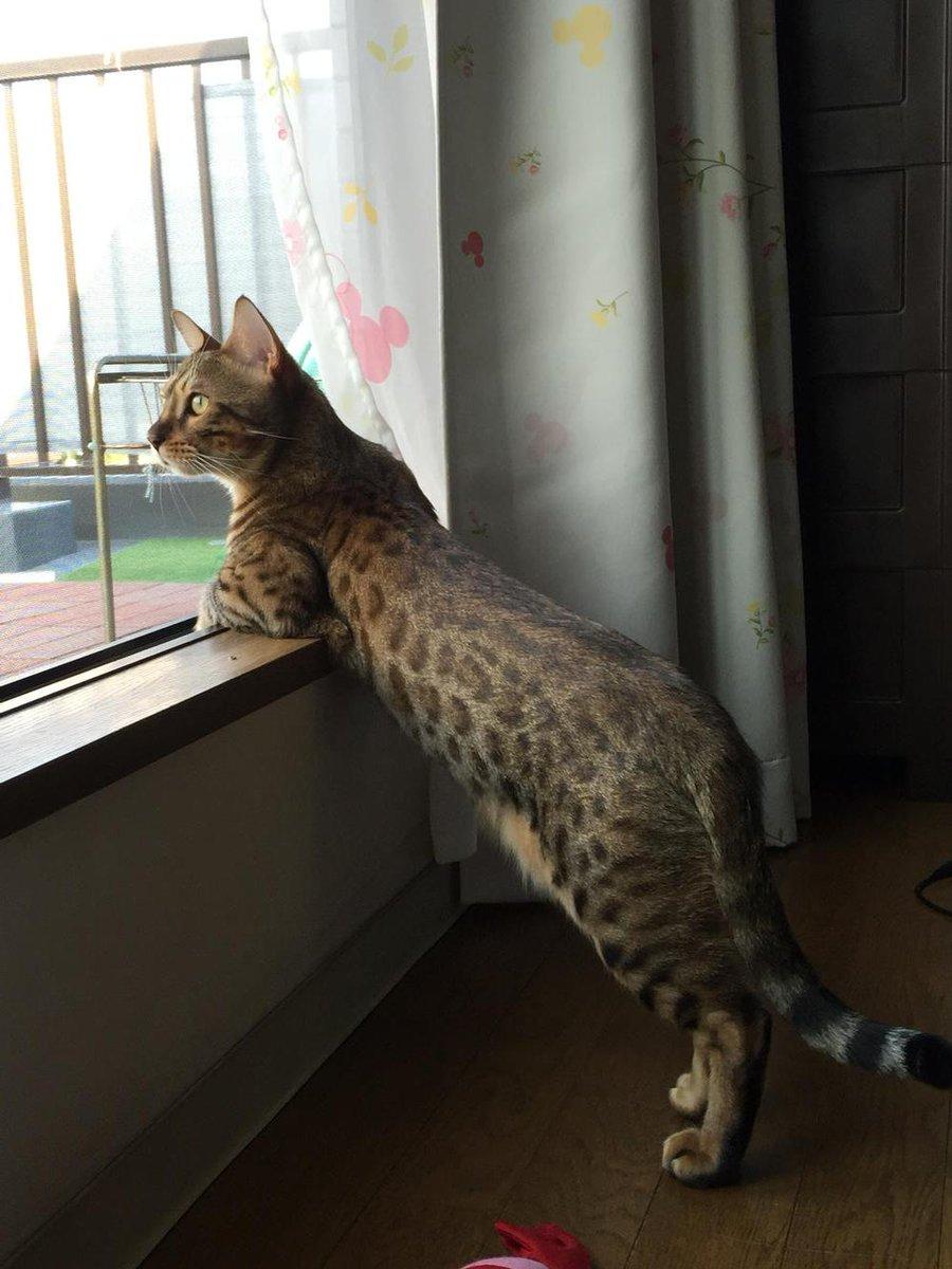窓辺の猫がちょっとカッコいいポーズとってた http://t.co/BYwgNdPKbn