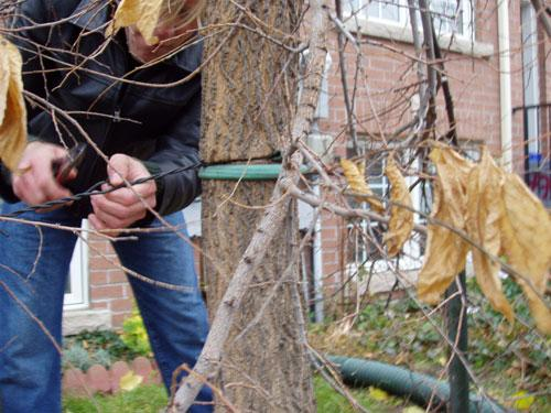 Remove stakes from trees after one year. Here's what happens when you don't! #LEAFtop10 things you can do for trees http://t.co/m0UTcOUsgb