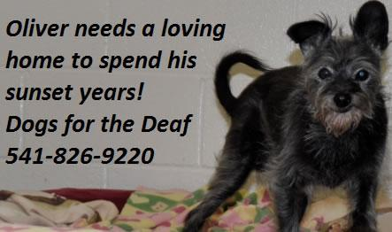 Senior citizen available for #adoptdontshop Please Please RT!!! http://t.co/06Sm3Z2Pqo