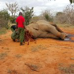 @ntvkenya @SmritiVidyarthi we should not wait for platforms we need action.We lost an elephant on world Elephant day! http://t.co/XKTi0fnWDn