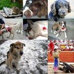 #TeCagoAPiñasSi maltratas a un animal.... http://t.co/XbdeJcVgcY