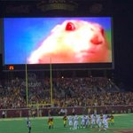 Minnesota has an awesome distraction when opposing teams kick FGs. http://t.co/HsgS9toPJB