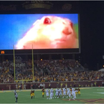 Minnesota is still using Dramatic Chipmunk to throw opposing kickers off – http://t.co/bRBstPEtxV http://t.co/sgidG60L5q
