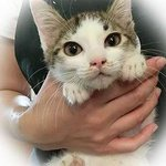 【慎重に】子猫165頭、成猫101頭の里親を募集中 東京都豊島区のNPO法人 http://t.co/KunvF1ZLYP 里親になるためには、公式サイトから申し込みを行う。書類に必要事項を記入した後、譲渡担当者と面談が行われる。 http://t.co/GiS8er0R6w