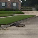 New video: Gator crawls out of storm drain, rests on familys front porch http://t.co/RMwbcfhYya http://t.co/rez07Ec5MF