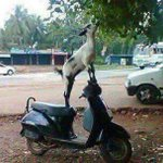 When @MBuhari separated the goat and the yam. @deleyewilliams @Ayourb @DOlusegun @trueNija @jag_bros @KaySoyemiEsq http://t.co/7m9jVMG8I0