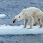 【切ない】骨と皮ばかりに痩せたホッキョクグマ ドイツ人カメラマンが撮影 http://t.co/7b5LAjG6sT 地球温暖化の影響で北極の流氷が解け、食べ物の確保が難しくなったことで、餓死するホッキョクグマが増えているという。 http://t.co/lRNMsKKFfT