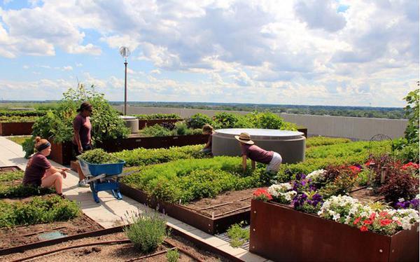 #Stadslandbouw op daken levert naast verse #groenten ook hele smakelijke beelden op... @VitaleGroenStad @Groen010 http://t.co/DSUeejhEWv