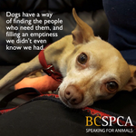 #Fact: dogs are loving and steadfast companions. Like Carter, who you can meet at our #Vancouver branch http://t.co/03qDeoqiUZ