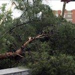 Una fuerte tormenta tira seis árboles y causa inundaciones en Alcorcón #Alcorcón http://t.co/HSigK6dOQo http://t.co/lpvECgnFJq