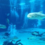 The @GeorgiaAquarium is open until 11 pm Saturday for a special @DragonCon event #11AliveLaborDay http://t.co/AAfo5EpyLh