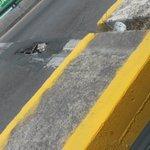 Condiciones actuales puente bicentenario carril boticaria cabeza olmeca #veracruz http://t.co/Y4s4W8vWZR —@maeuzavi https://t.co/PINkNEgHEq
