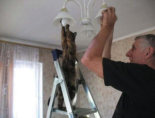 身近な英語表現 - 「電気が切れる」ってどのように表現する? http://t.co/EuO6lxrCjS http://t.co/TYAuTotK1S