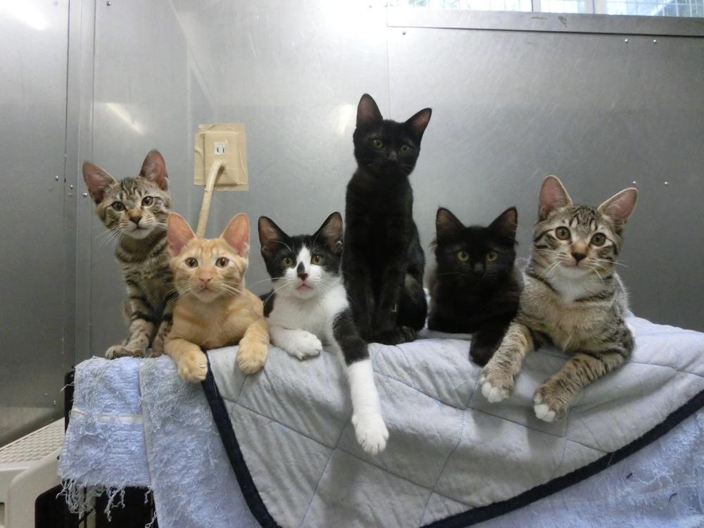 ただ今アークには50匹余りの子猫が暮らしています。みんな元気も食欲も旺盛! というわけで、また子猫のフードが底をつきそうです。度々恐れ入りますが、ご支援頂けましたら助かります! http://t.co/gUdH7hPVcR http://t.co/R9ww1kO3UH