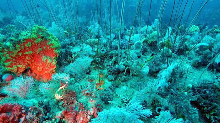#Australia seabed discovery rivals #GreatBarrierReef http://t.co/d2YjdRkTRT  #reefdefenders #ocean #environment #eco http://t.co/LVTCDfXLbA